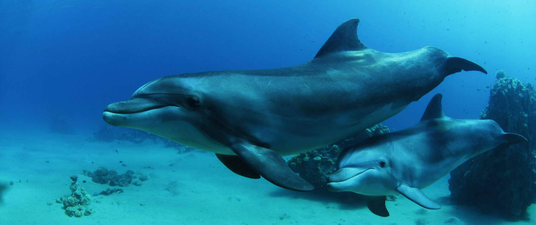 delfine ingo vollmer