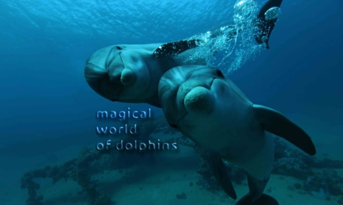 magical dolphins