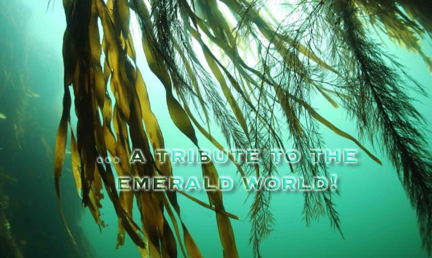emerald world tribute