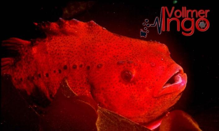 UW Pictures, Fish Photography, Ingo Vollmer